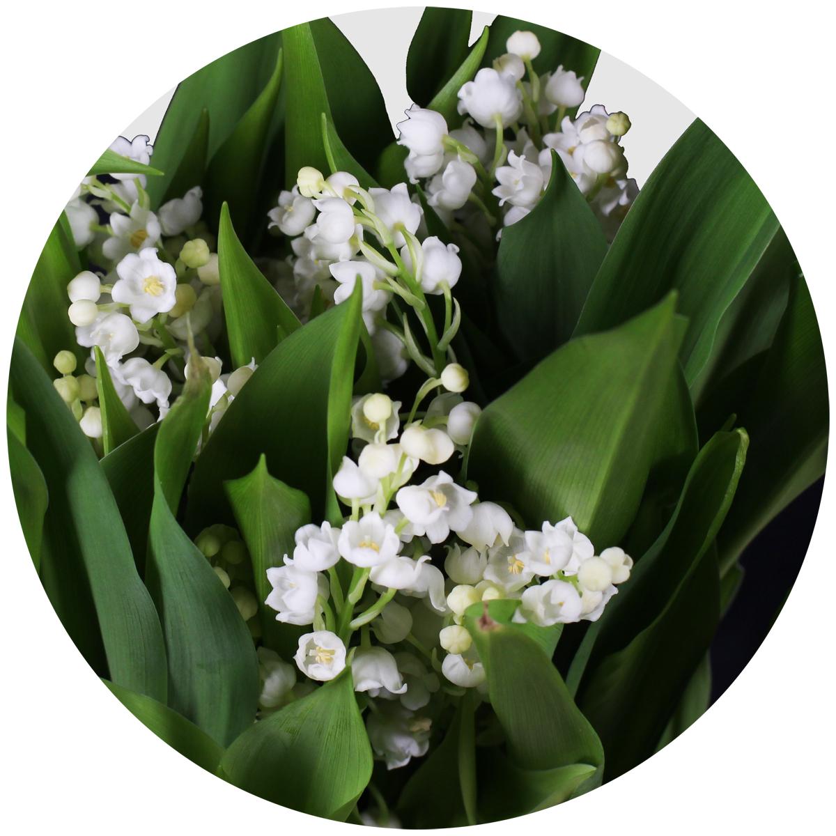 Цветы которые есть круглый год